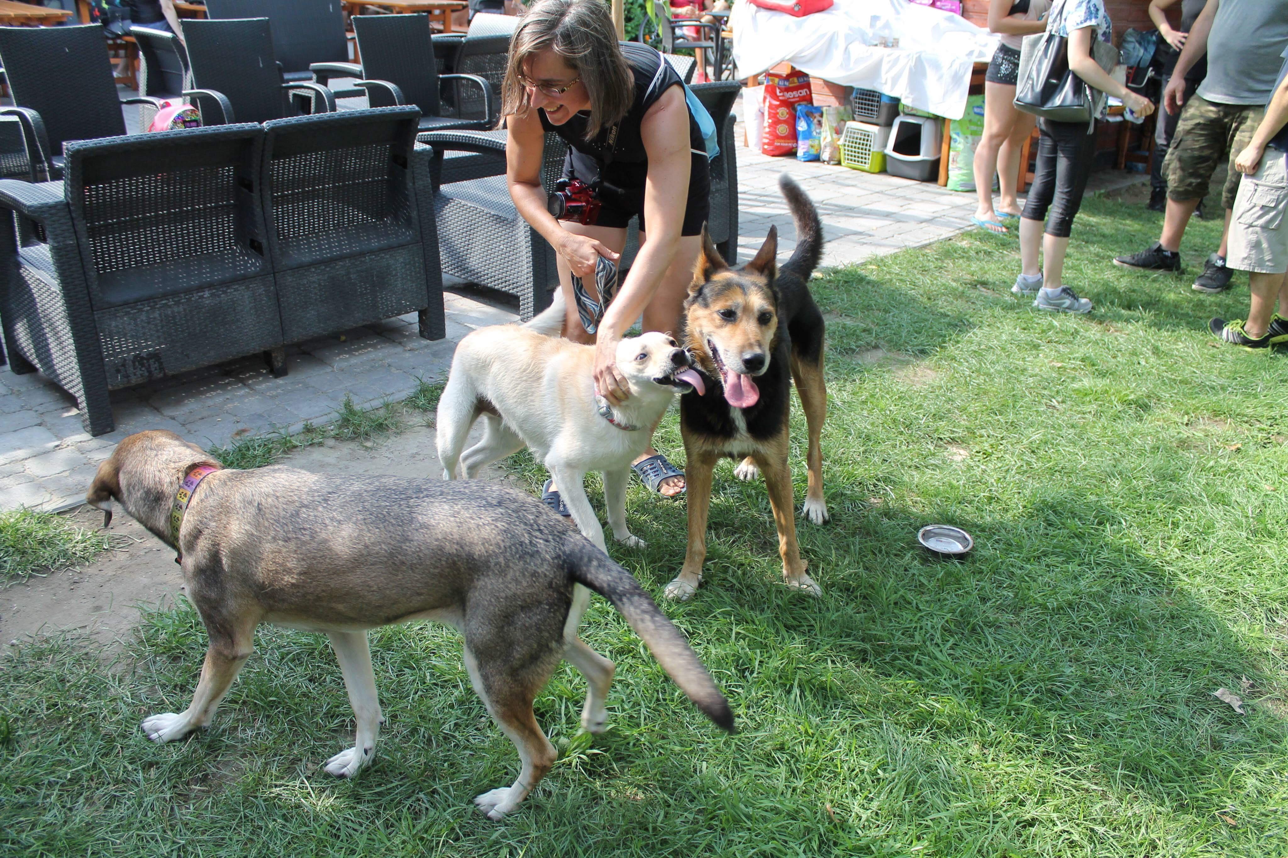 Agenor – elkötelezett munka az állatokért