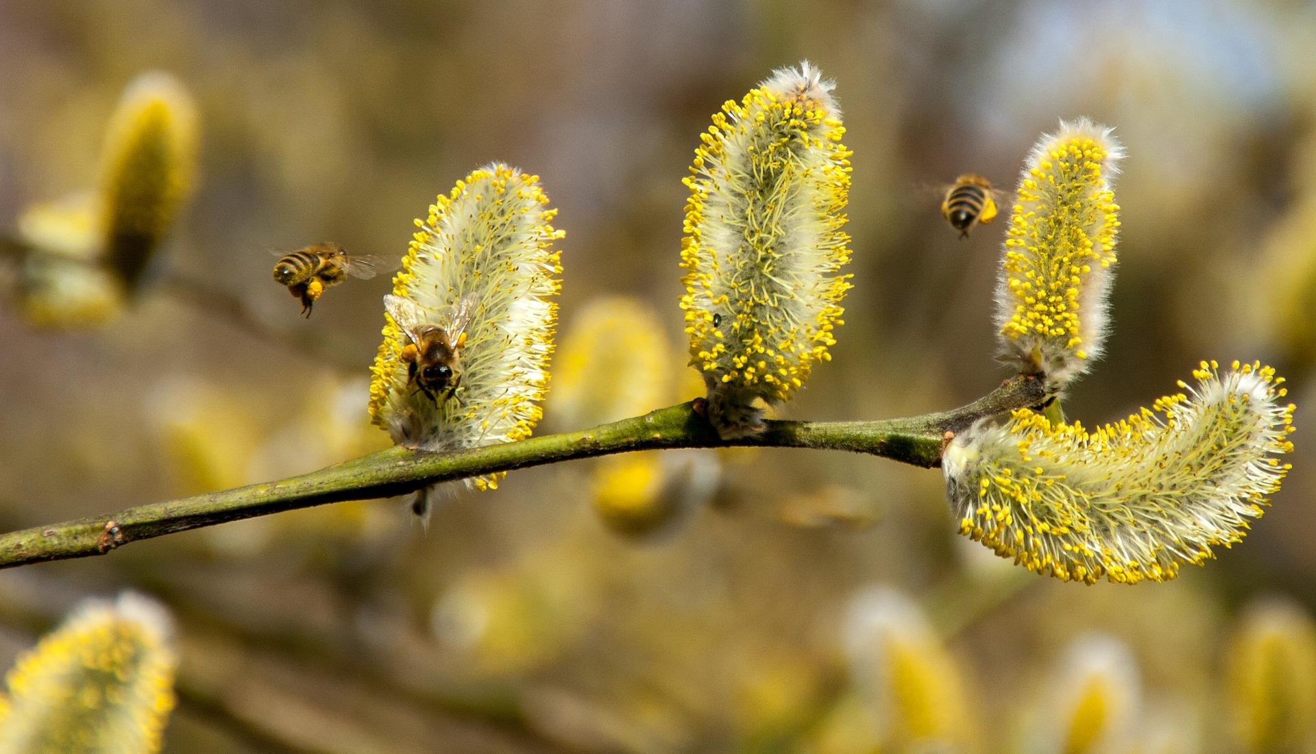 Heteken belül indul a tavaszi allergiaszezon